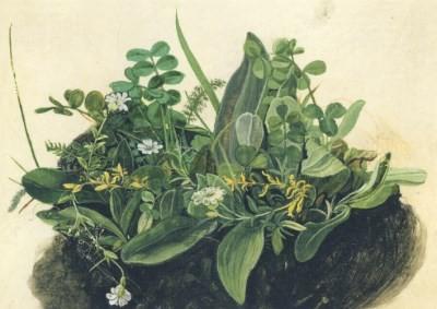 Albrecht Dürer. Das kleine Rasenstück, um 1503