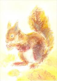 Grills, C. Meine Tiere 4, Eichhörnchen. KK.