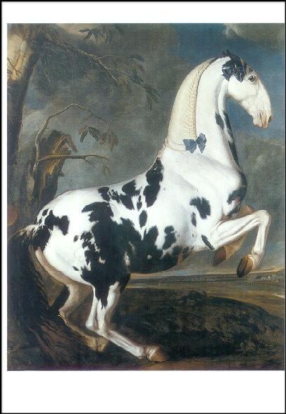 Hamilton, J.G. Bildnis eines Schecken.... ca. 1700. KK
