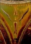 Seraphim. Narthex, San Marco, Venedig, 1220-1300. KK