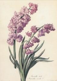 Spaendonck, G. Hyacint. KK