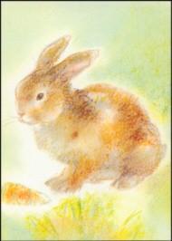 Grills, C. Meine Tiere 2, Kaninchen. KK