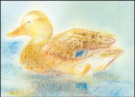 Grills, C. Meine Tiere 1, Ente. KK.